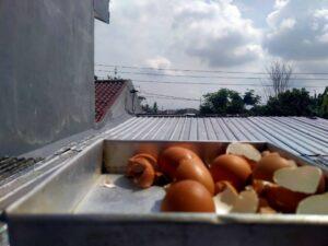 6 Manfaat Cangkang Telur Yang Wajib Diketahui